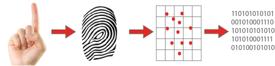 Fingerprint Template Storage